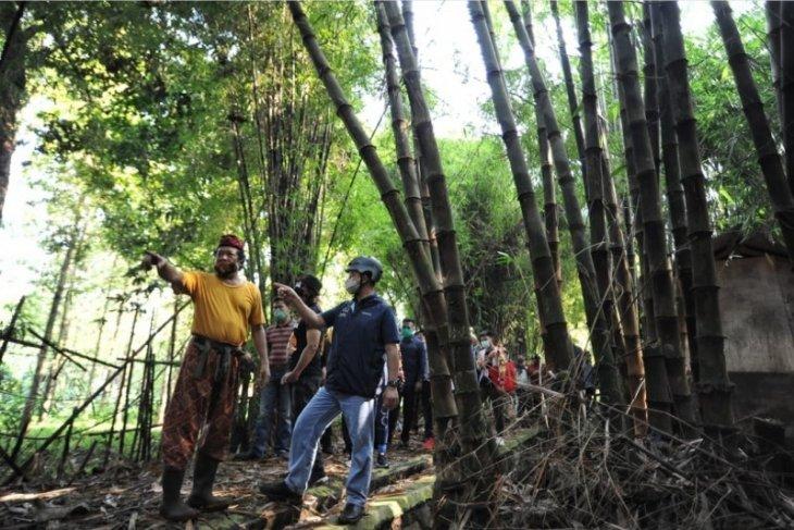 Anies peringati Hari Lingkungan Hidup dengan tanam bambu