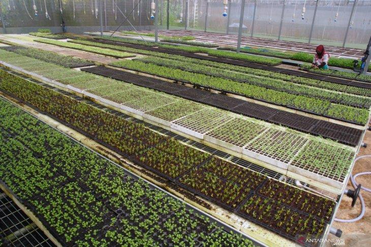 Perluas akses pasar produk pertanian masa pandemi