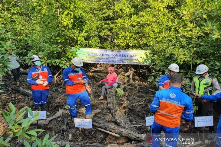 Indocement pulihkan  kawasan mangrove  di Kotabaru