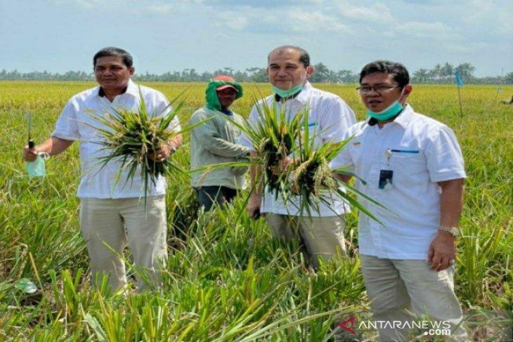 Bulog Sumut beli beras  petani capai 9.055 ton