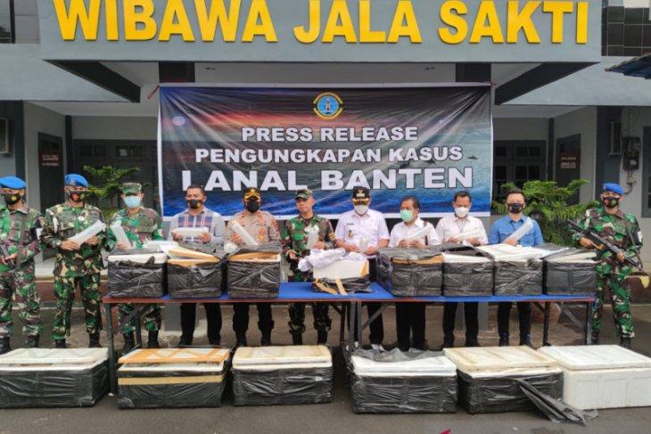 Gagalkan penyelundupan benur, Lanal Banten selamatkan aset negara Rp7,8 miliar