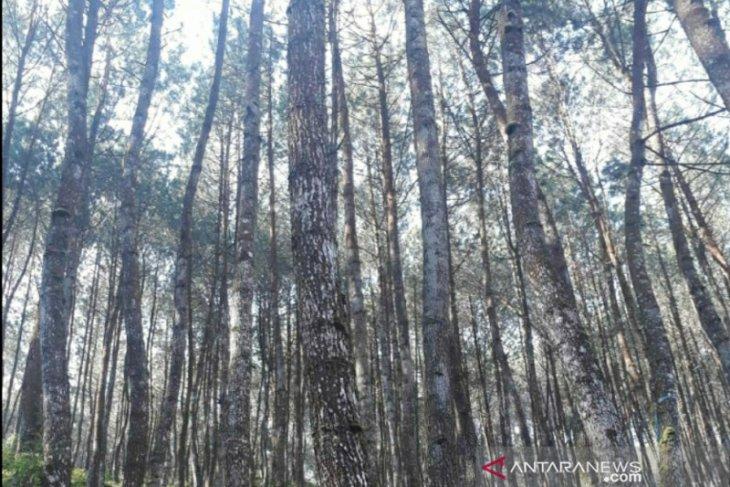 Kasus perusakan hutan di Karawang ditindaklanjuti Gakkum Kementerian LHK