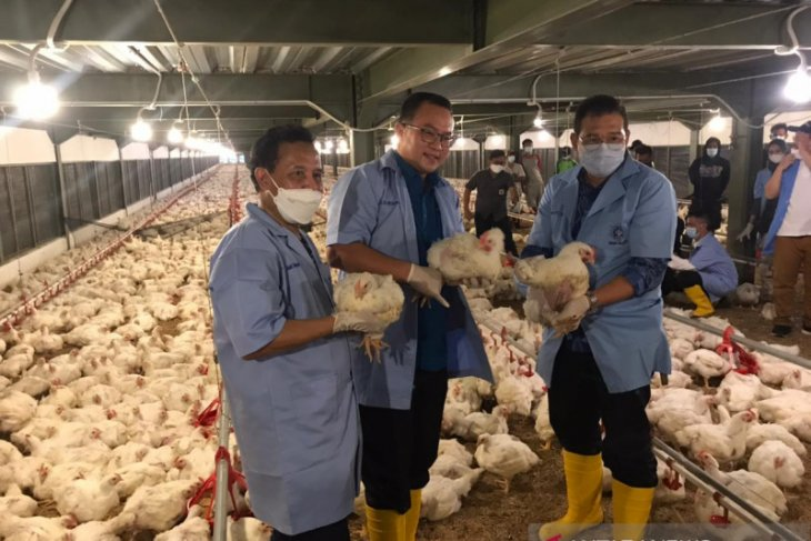 IPB miliki 'tefa closed house' yang jadi percontohan perternakan ayam termodern di Indonesia