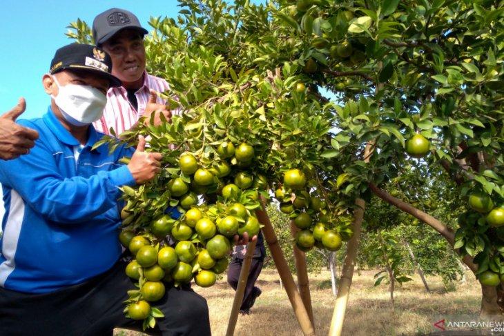 Bung Karna dorong petani kembangkan JeSi