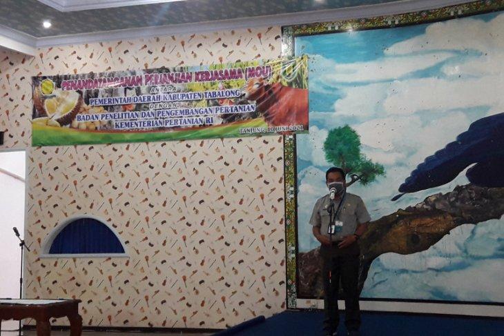Durian Tabalong dapat sertifikat perlindungan varietas