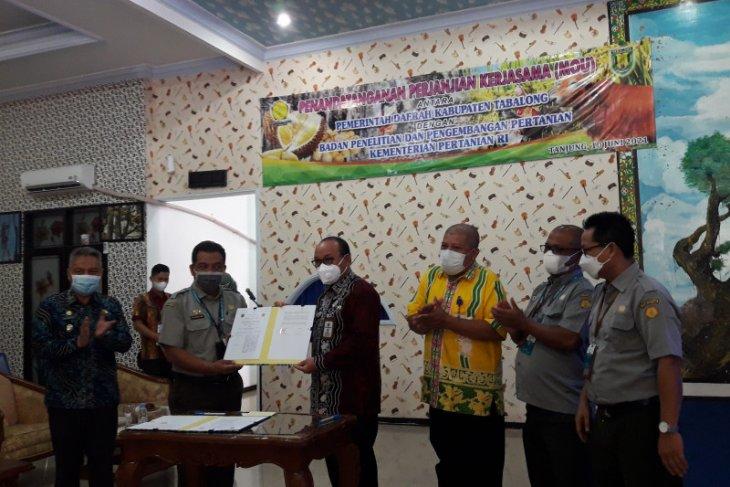 BPTP Kalsel kembangkan teknologi pembibitan ayam kampung di Tabalong