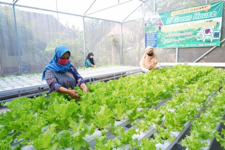 Petani Hidroponik Kota Kediri waspada hama penggorok dan kutu daun