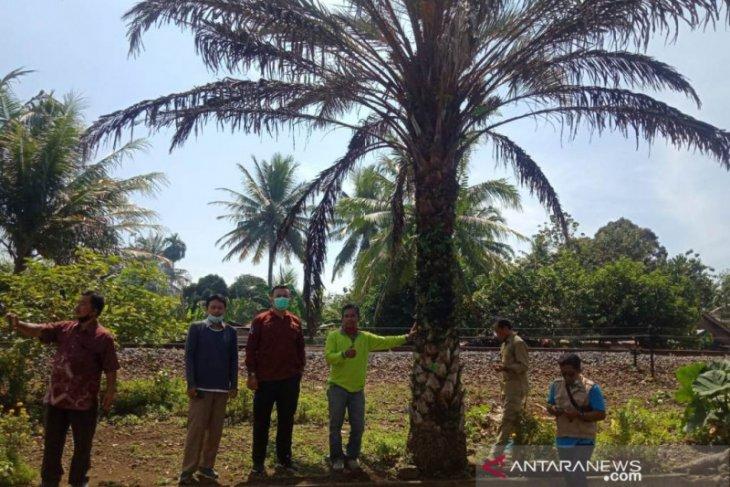Distankan: Wilayah Lembak potensial untuk pengembangan sawit dan kurma