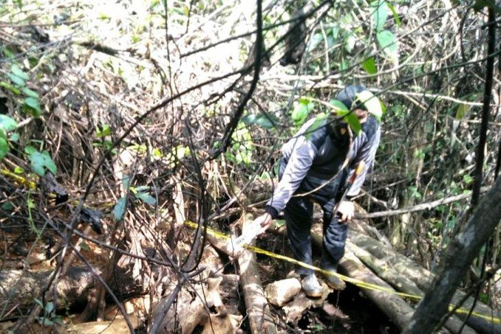 BKSDA lakukan penyidikan terkait penemuan bangkai gajah di Mukomuko