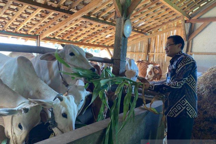 BI Malang inisiasi pengembangan klaster pembiakan sapi potong