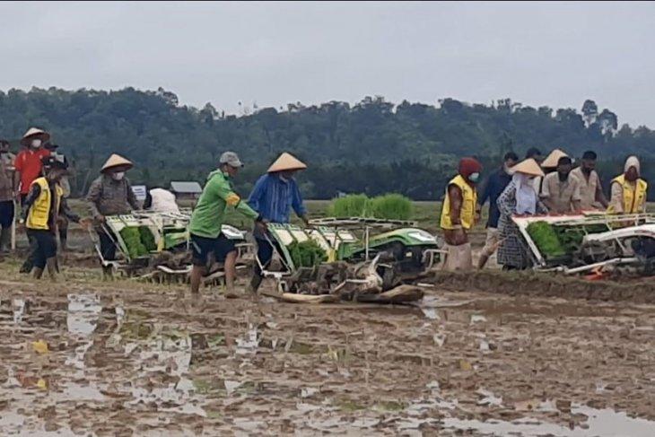 Aceh Timur tanam padi perdana IP 300. Apa Itu?