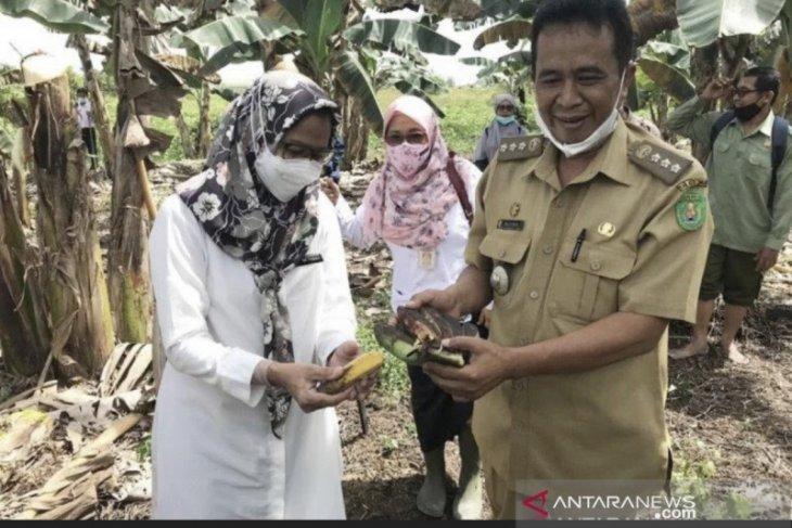Kabupaten Kutim dan Paser dapat kuota kegiatan Pertanian Keluarga