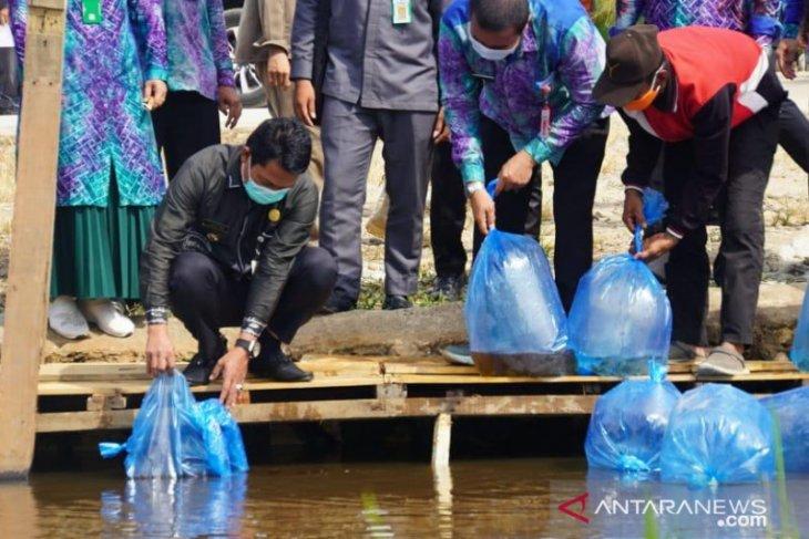 Bupati Balangan tebar 10 ribu bibit ikan Papuyu