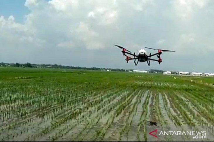 DKPP Probolinggo gunakan drone untuk semprot hama dan penyakit tanaman