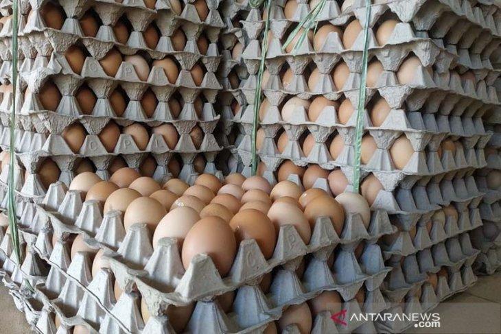 Harga telur ayam di Subulussalam Rp44 ribu per papan