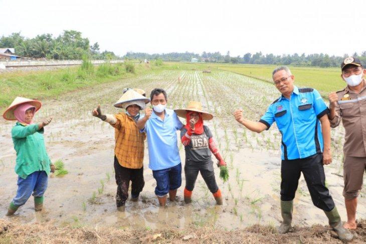 Wali Kota Binjai Amir Hamzah tanam padi