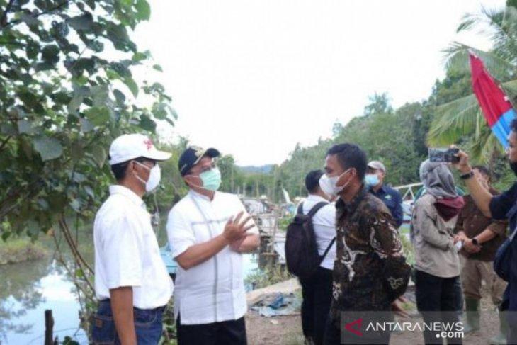 Gubernur Erzaldi tinjau rehabilitasi bakau di Belitung