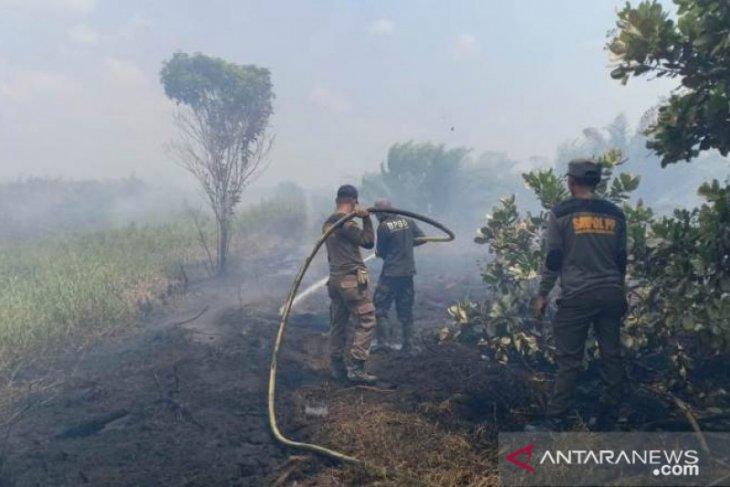 Empat kebakaran hutan dan lahan terjadi di Penajam  pada awal Juni