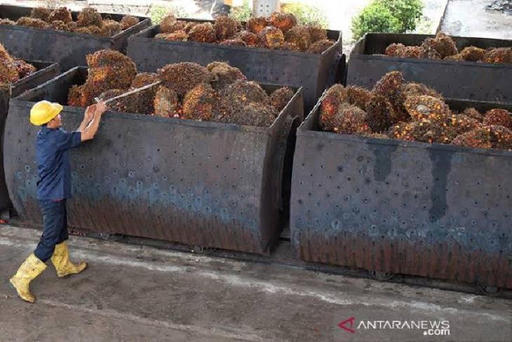 Aceh miliki dua pelabuhan ekspor CPO sawit