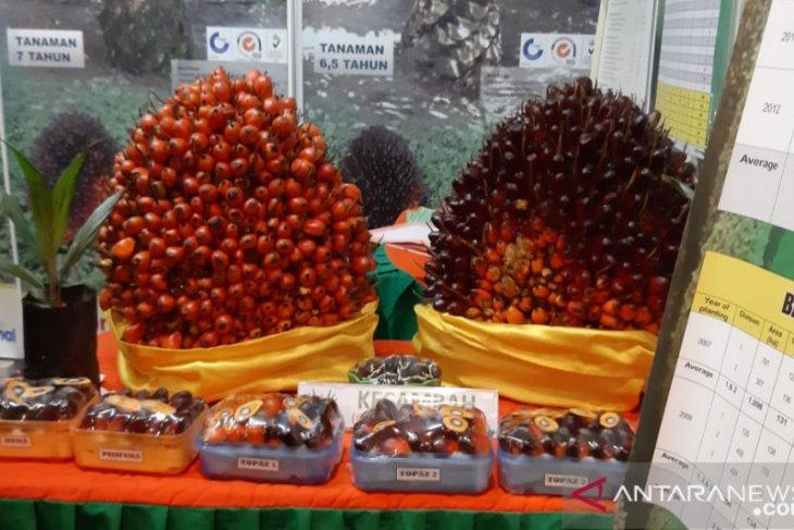 Harga TBS kelapa sawit di Kalbar terus naik