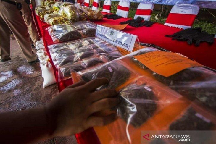 Polresta Banjarmasin selamatkan 528 orang dari pengungkapan kasus ganja