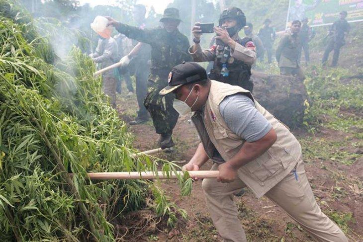 Sekdakab Aceh Besar dampingi Kepala BNN musnahkan ladang ganja