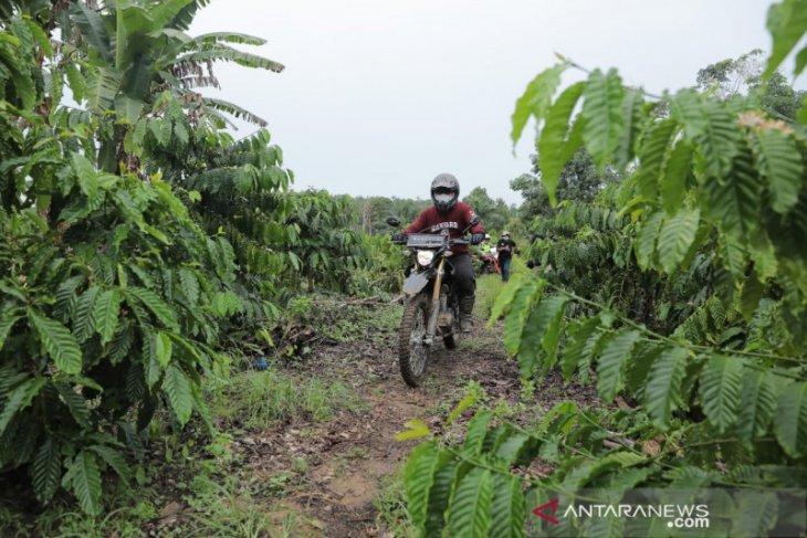 Pemprov Kepulauan  Babel sediakan 350 hektare kembangkan perkebunan kopi