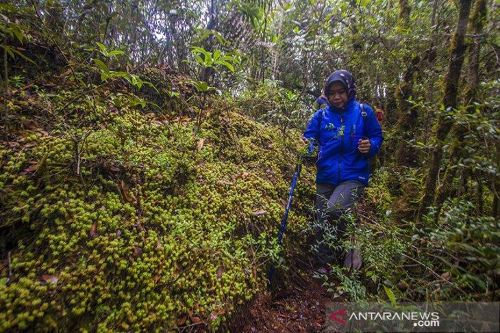 Hutan Hujan Tropis Pegunungan Meratus