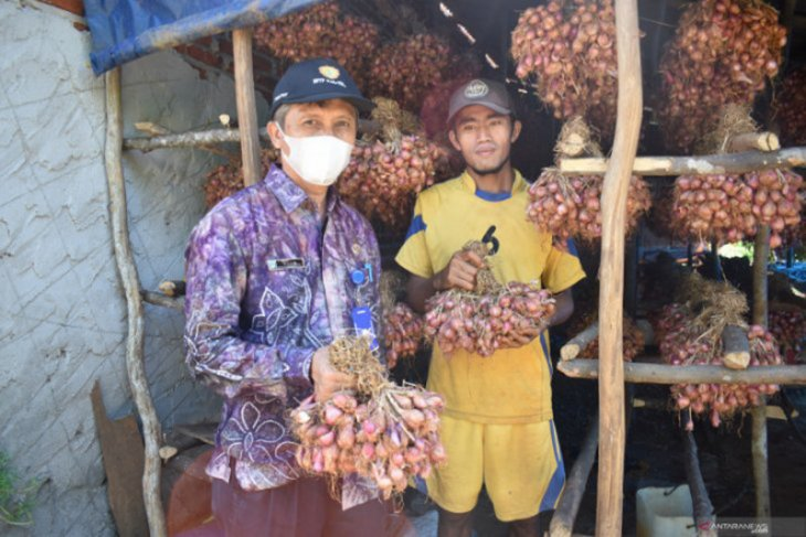Tanah Laut successfully breeds shallot seeds
