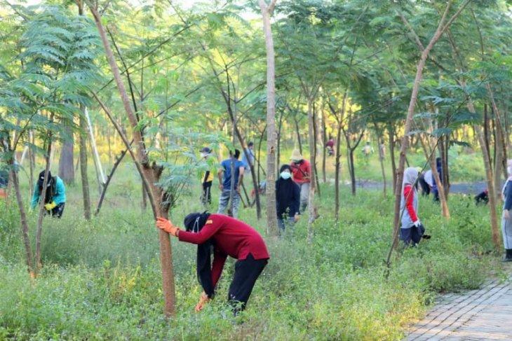 Dishut Kalsel rawat tanaman di bundaran pohon Jokowi