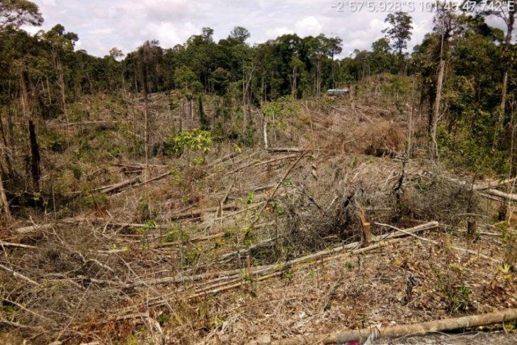 KPHP Mukomuko laporkan perambah hutan