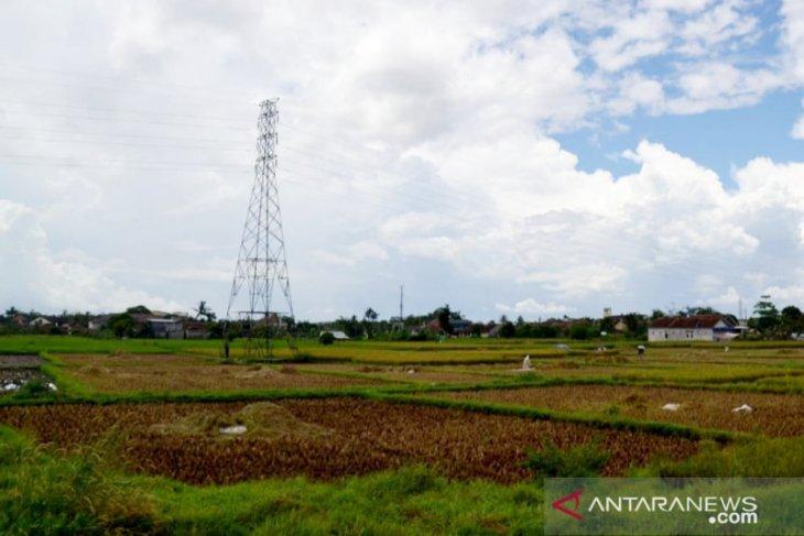 Berdayakan petani, ASN Bogor ditarget beli 850 ton beras lokal