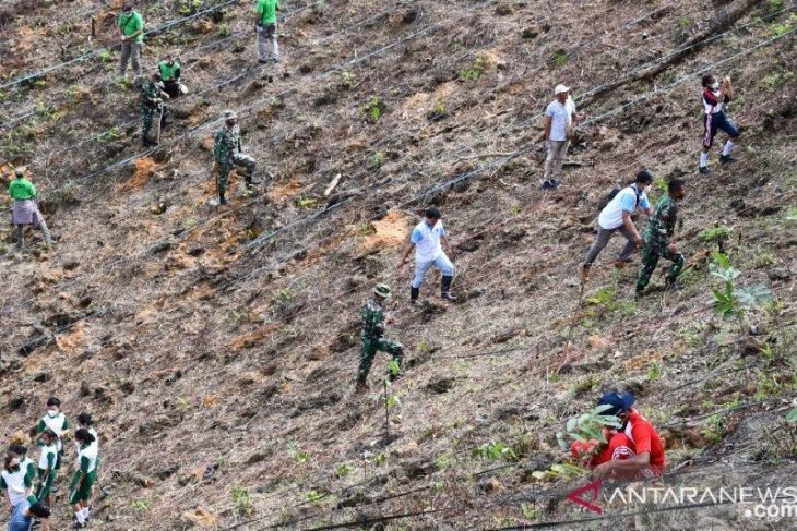 Pemerintah kota Sorong dan PLN tanam 1.000 pohon di lahan kritis