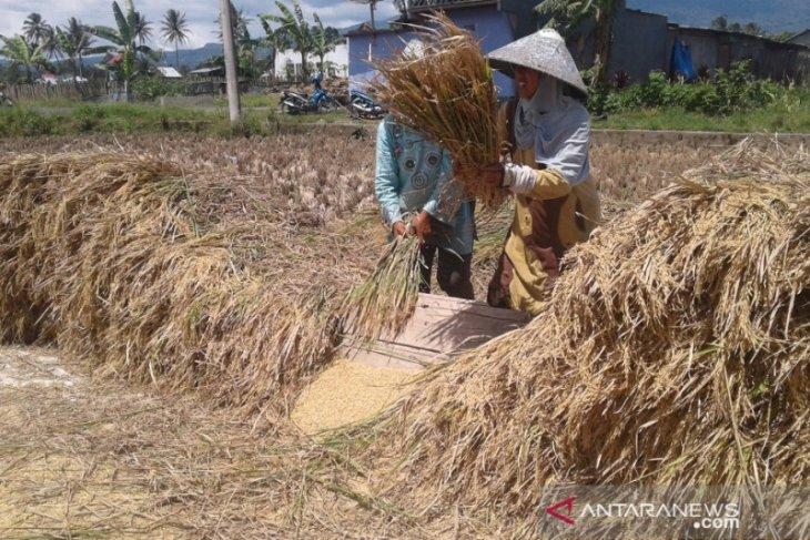Bulog Rejang Lebong serap 875 ton beras petani