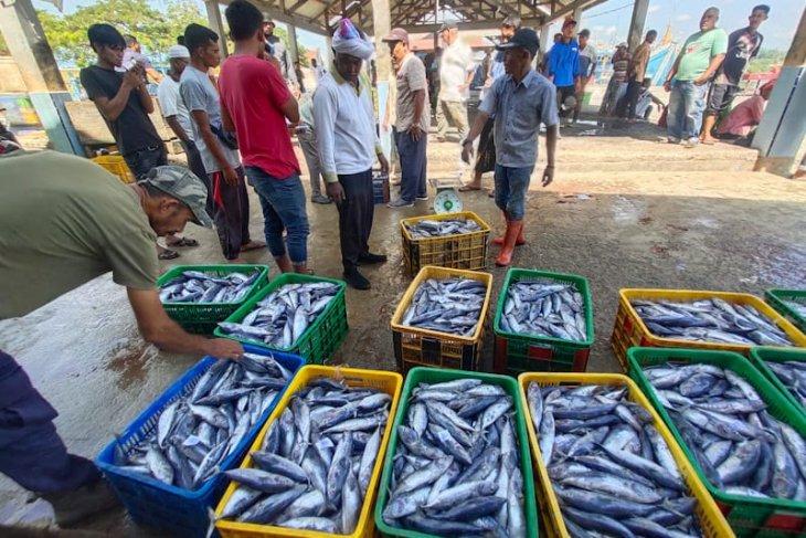 Tangkapan melimpah, Harga ikan tongkol di Aceh Timur anjlok