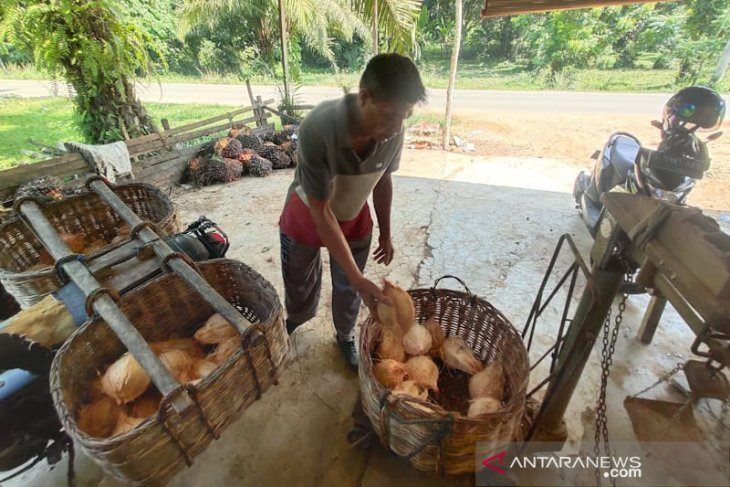 Harga kelapa naik drastis di Aceh Timur naik