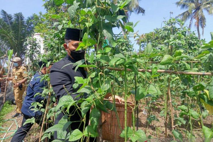 Panen kacang  panjang  Walikota Jambi minta warga Danau Teluk manfaatkan lahan tidur