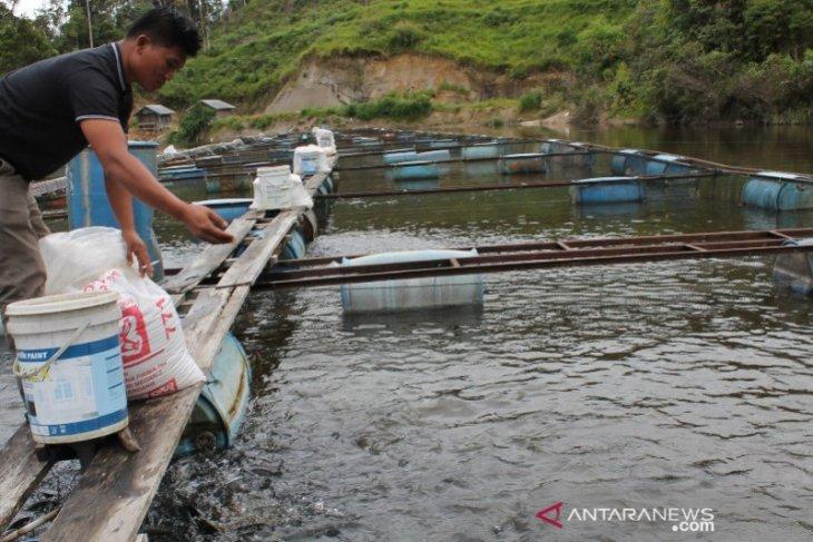 Menengok Desa Sampean penghasil ikan Nila