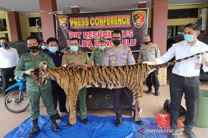 Polisi buru dua pelaku sindikat perdagangan harimau di Bengkulu