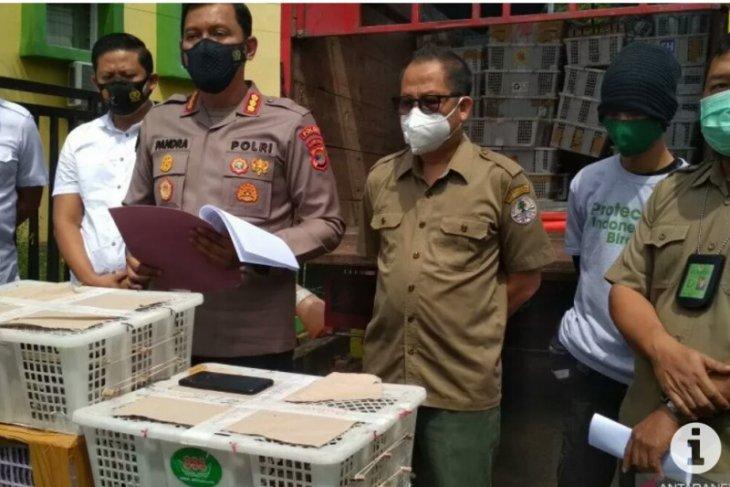 BKSDA Bengkulu melepasliarkan ribuan burung hasil sitaan