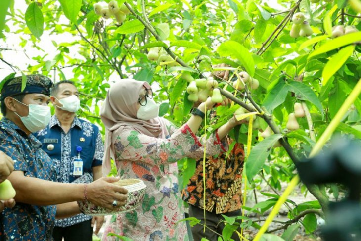 Bupati Ipuk dorong petani Banyuwangi berinovasi olah hasil pertanian
