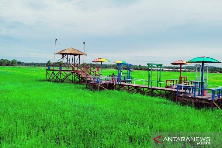 Legislator Penajam apresiasi  wisata sawah Desa Gunung Mulia