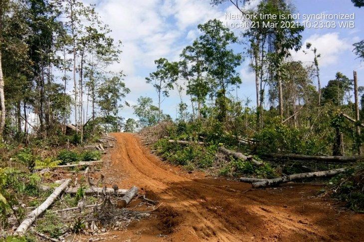KPHP Mukomuko tetap awasi hutan dari perambahan