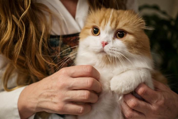 Apakah kucing kamu bahagia? Cek lewat aplikasi ini