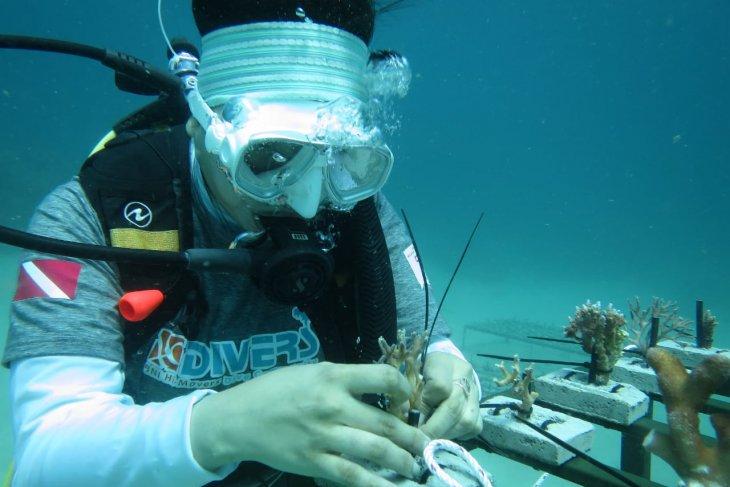 BNI tanam ribuan terumbu karang di Likupang