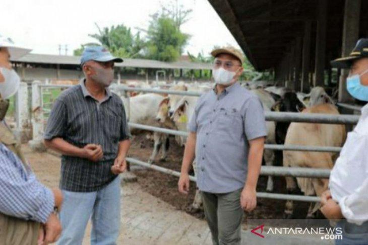 Gubernur Erzaldi jajaki pembiakan sapi Australia