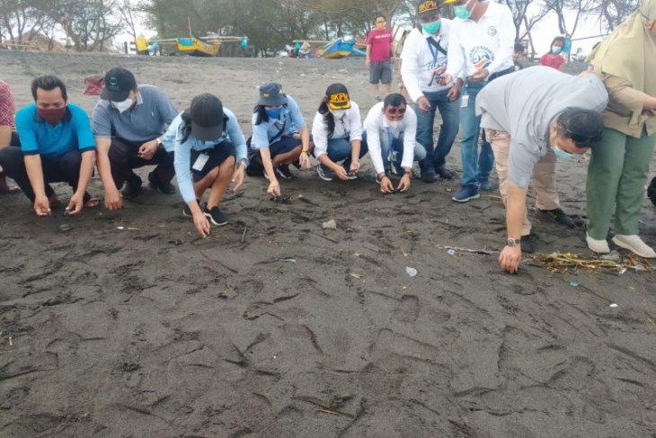 Puluhan tukik lekang  berlarian menuju laut di  Pantai Bugel Kulon Progo