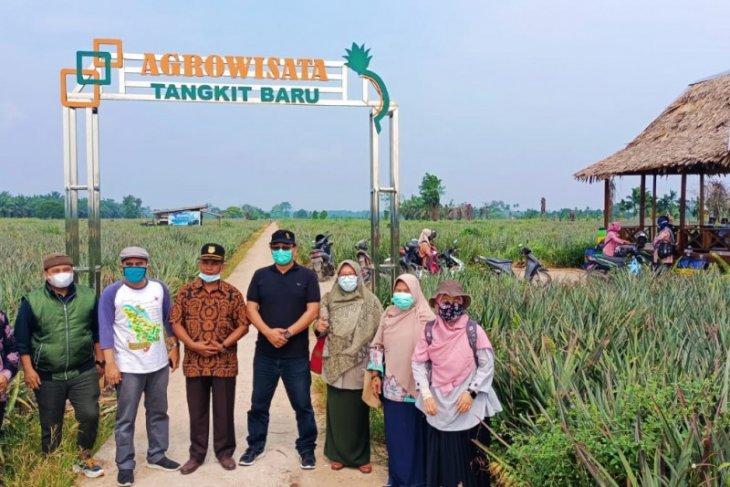 Hilirisasi inovasi produk nanas perkuat agrowisata Desa Tangkit Baru