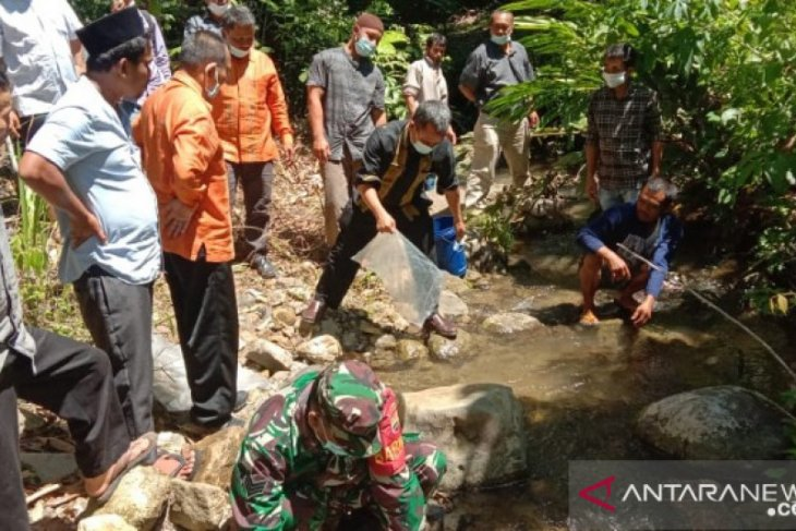 Inisiasi LSLI, seribuan ekor benih ikan jurung ditabur ke sungai koridor hutan Batang Toru