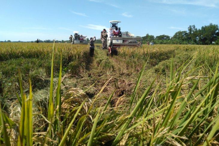 Petani di Karawang keluhkan harga gabah anjlok di bawah HPP